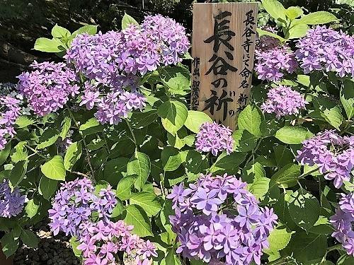 KAMAKURA17 (4).jpg